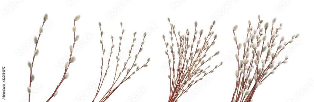 Fototapeta Willow twigs isolated on white. without shadow