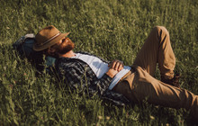 Bearded Explorer Sleeping On Grass