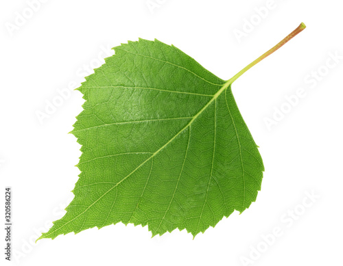 Photo Birch leaf isolated white background