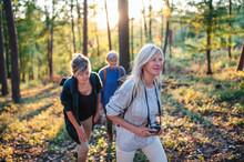 Senior Women Friends Outdoors In Forest, Walking.