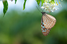 A Butterfly Upside Down Hangin...