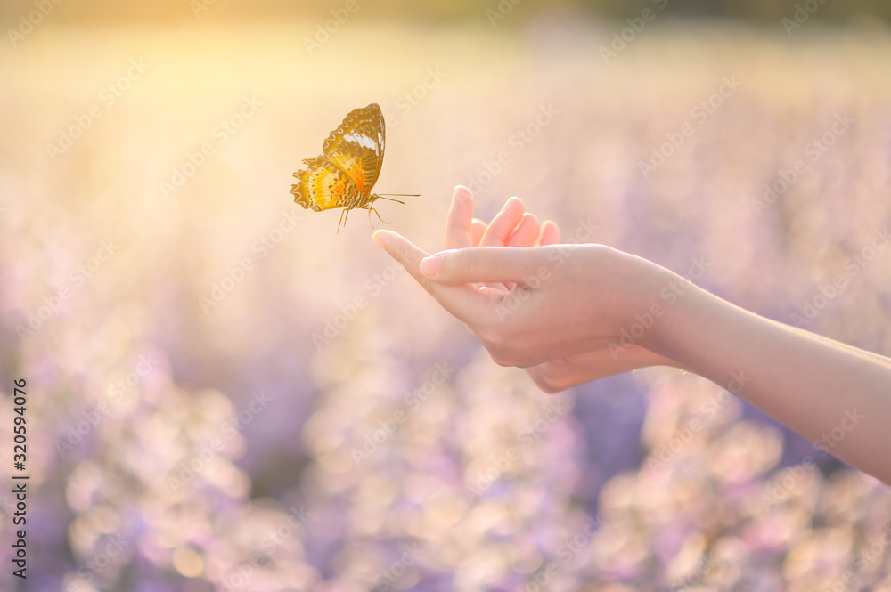 Fototapeta The girl frees the butterfly from the jar, golden blue moment Concept of freedom