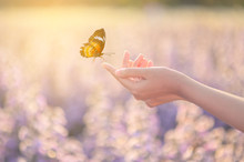 The Girl Frees The Butterfly F...