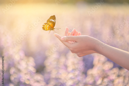 Foto The girl frees the butterfly from the jar, golden blue moment Concept of freedom