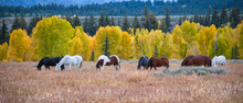 Wild Horses In An Autumn Lands...