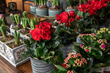 Variety Of Beautiful Potted Re...