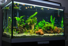 Fresh Water Aquarium With Card...