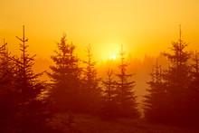 Colored Sun Rays Through Fir T...