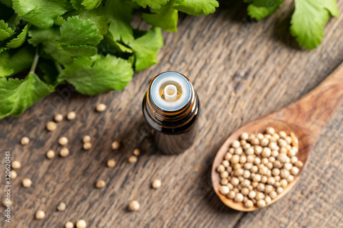 Fototapeta A bottle of coriander essential oil with coriander seeds and cilantro leaves obraz