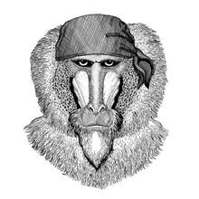 Monkey, Baboon, Ape. Wild Anim...