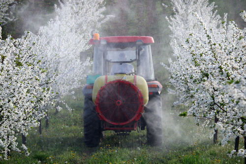 Fotografía tractor sprays insecticide in cherry orchard in spring  agriculture