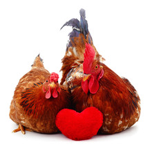 Chicken And Cock With Heart.