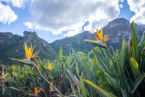 Photo Kirstenbosch Botanical Garden Views in Cape Town South Africa