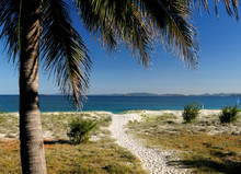 Tropical Palm With Beach And Ocean In The Background Great Keppel Island Queensland Australia