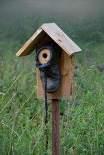 A DIY Bird House, Made From An Old Shoe And Some Wood.