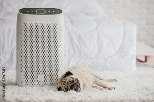 Fényképezés Dog Pug Breed and Air purifier in cozy white bed room for filter and cleaning removing dust PM2