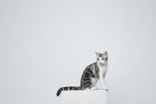 A Cat Makes All Kinds Of Movem...