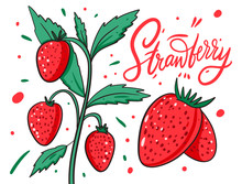 Strawberry On A Branch. Vector...