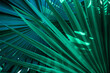 canvas print picture - abstract palm leaf textures on dark blue tone, natural green background