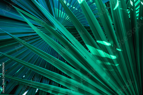 Wall mural - abstract palm leaf textures on dark blue tone, natural green background