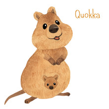 Cute Kawaii Hand Drawn Watercolor Art. Smiling Australian Quokka With Baby In Bag. Isolated On White Background