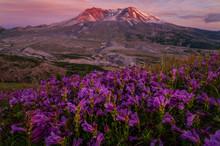 Mountains And Wildflowers - Wa...