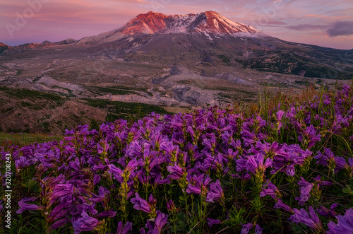 Mountains and Wildflowers - Washington - Mt St Helens Canvas Print