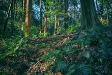 森の中の風景