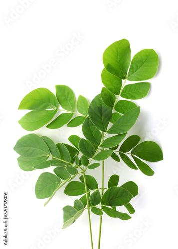 daun-kelor-lub-zielone-liscie-moringi-tropikalne-ziola-ma-niezliczone-zalety-dla-zdrowia-ludzkiego-ciala-na-bialym-tle