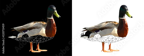 Low poly triangular and wireframe duck drake on black and white background, vector illustration isolated Canvas