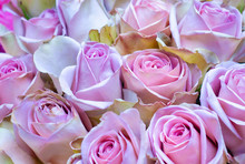 Background With Beautiful Rose...