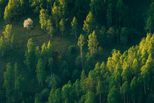 Sunrays Over A Green Forest In Summer.