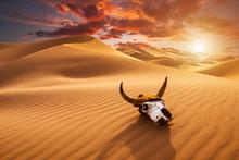 Bulls Skull In The Sand Desert...