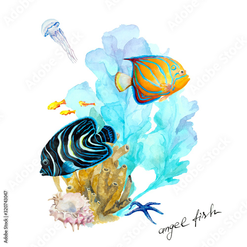 Photo Fish Emperor angelfish (Pomacanthus imperator and blue-ringed angelfish (Pomacanthus Annularis), underwater landscape, hand drawn watercolor