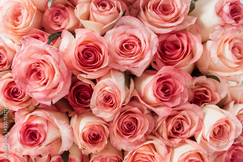 Fotomural Closeup of pink roses flowers buds pattern.