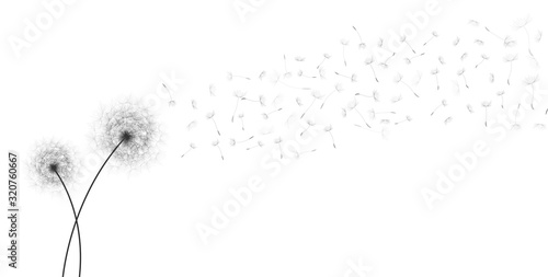 Spring Greeting Card Design with White Dandelions Flowers Silhouettes