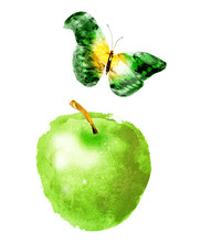 Watercolor Apple And Butterfly...