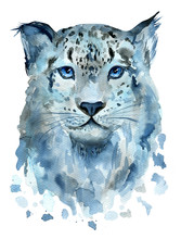 Watercolor Snow Leopard Isolat...