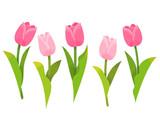 Fototapeta Tulips - イラスト チューリップ ピンク