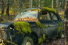 Mossy Old Car Abandoned In A F...