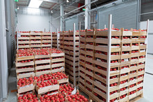 Import Tomatoes At Pallets In ...
