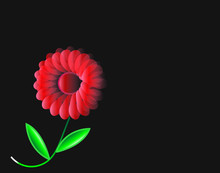 Red Flower Isolated On Black B...
