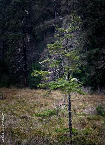 Lonely Tree In Forest Meadow Under Gentle Light