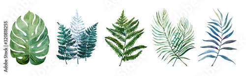Beautiful watercolor tropical leaves painted on white paper