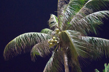 Palm Tree Against The Night Sky