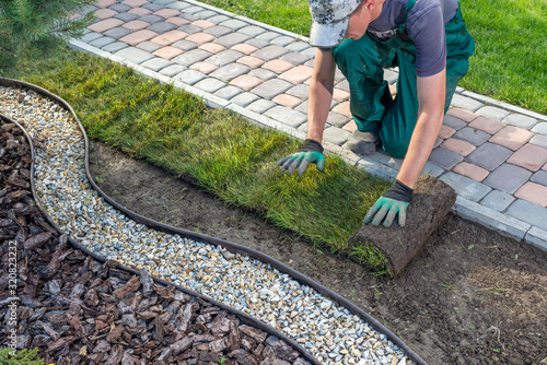 Gardener applying turf rolls in the backyard Canvas Print
