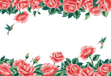 Background Frame With Red Roses And Hummingbirds. Isolated On White.