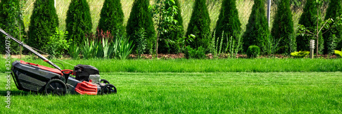 Lawn mower cutting green grass in backyard, green thuja trees on background - 320864079