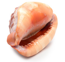 A Large Mollusk Shell Of Red-b...