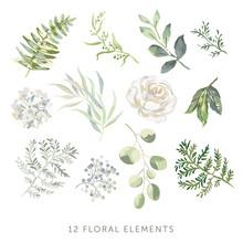 Rose, Hydrangea, Green Leaves,...